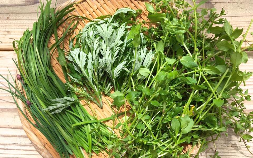 野草料理の探求はつづく♪自宅の半径5メートルで摘んだはこべ、よもぎ、庭のニラとチャイブで作ったもの。