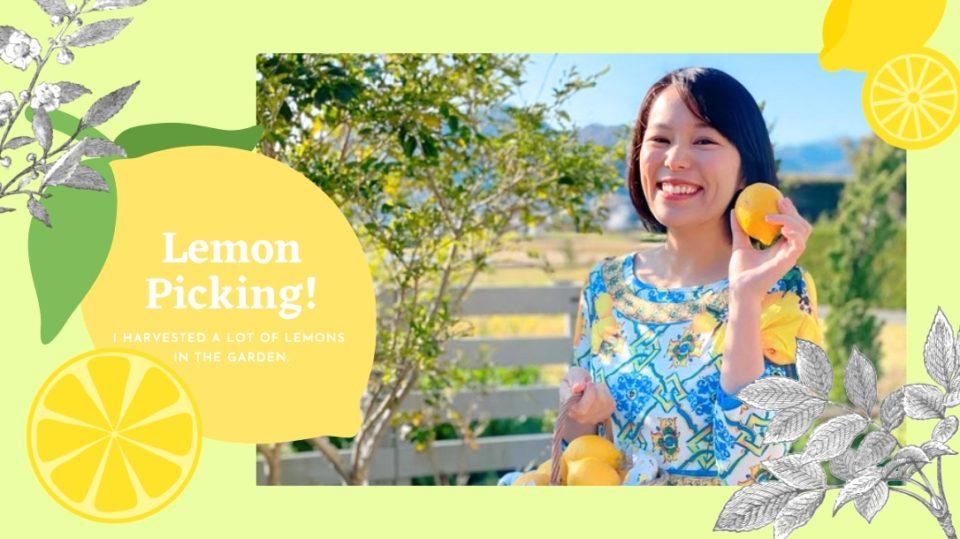 【家庭菜園日記】庭のオーガニック・レモンを収穫! 料理にスイーツに、レモンづくしな日々。